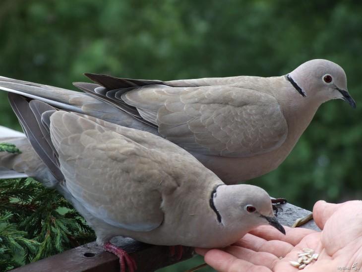 Mybirds.ru
