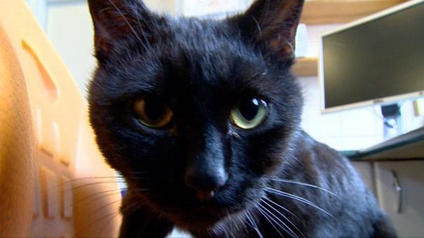 Фото 9 - удивительная кошка медсестра помогает ухаживать за больными животными