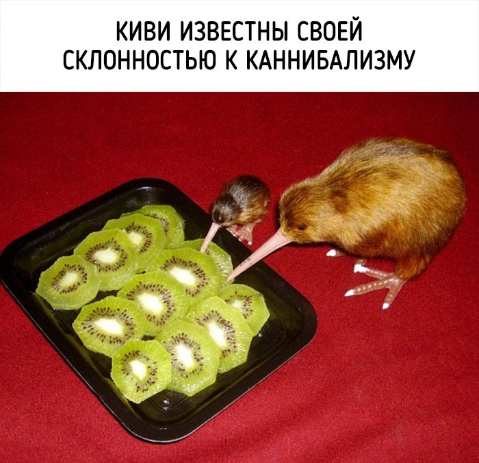 Источник фотографий: Fishki.net
