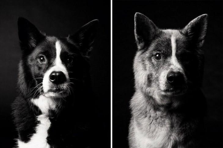 Как взрослеют собаки: 12 трогательных фотографий