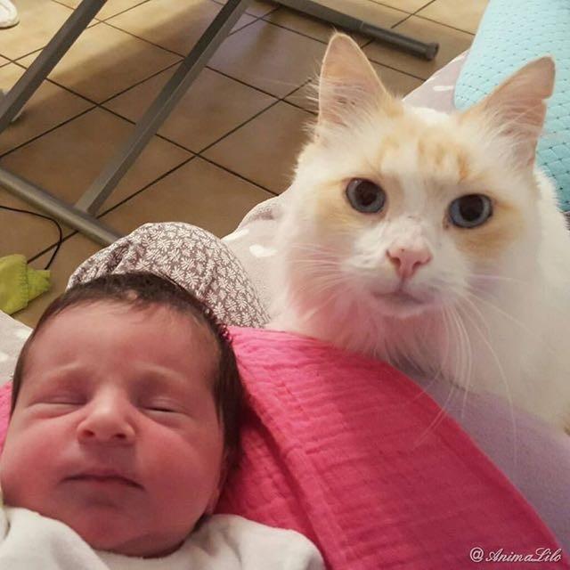 Эта кошка полюбила малыша ещё до его рождения