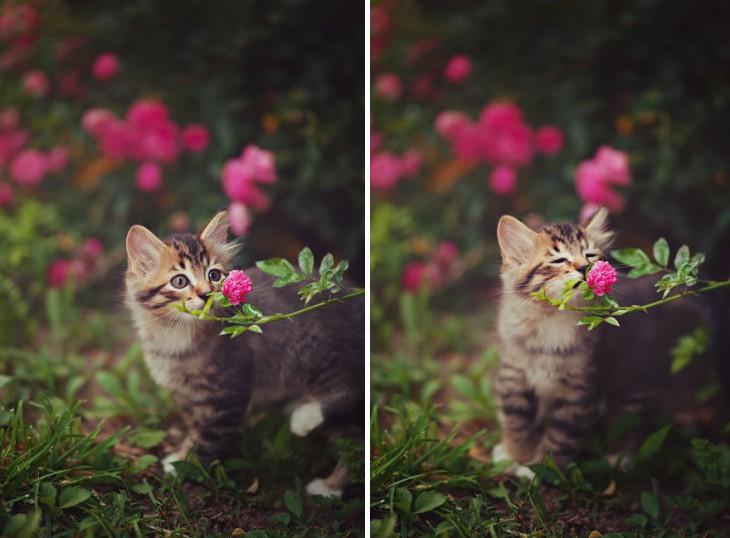 15 очаровательных животных, наслаждающихся ароматом цветов