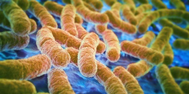 Зачем кишечнику микрофлора? 5 фактов, которые важно знать
