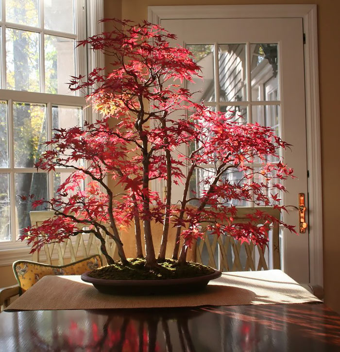 Источник фотографий: Boredpanda.com
