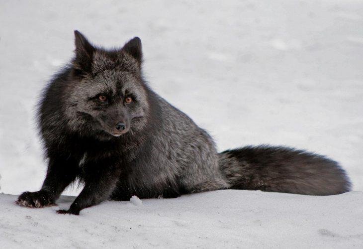 Age-of-mammals.ucoz.ru