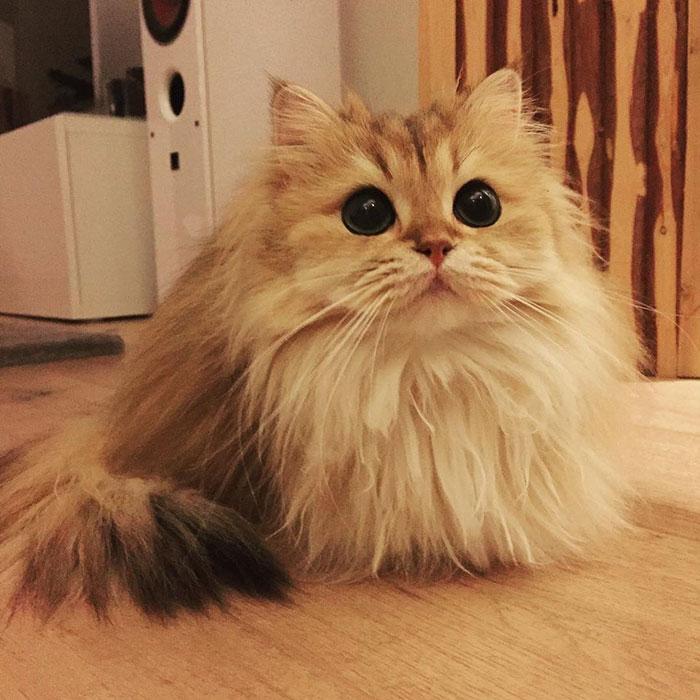 Познакомьтесь со Смузи, самым фотогеничным котиком в мире!