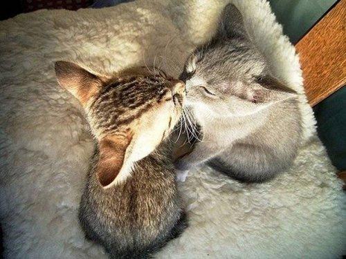 Фото - 20 пар совершенно синхронных котов