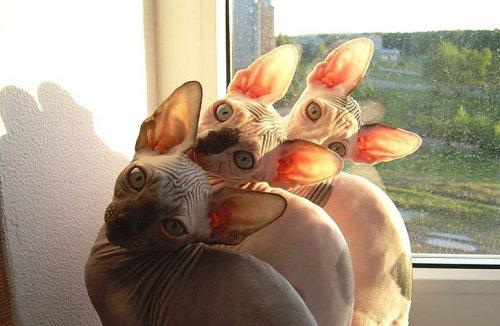 Фото 10 - 20 пар совершенно синхронных котов