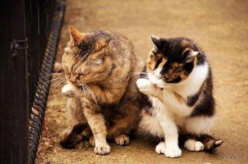 Фото 12 - 20 пар совершенно синхронных котов