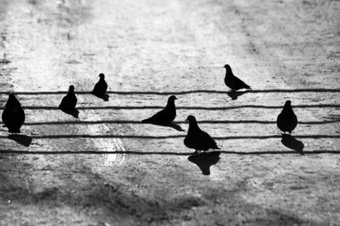 Птички в клетке из бумаги