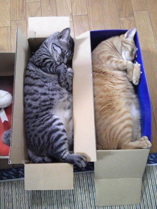 Фото 13 - 20 пар совершенно синхронных котов
