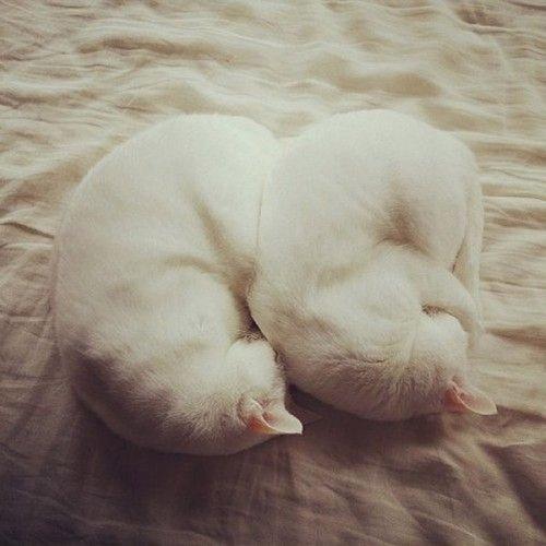 Фото 14 - 20 пар совершенно синхронных котов