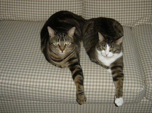 Фото 15 - 20 пар совершенно синхронных котов