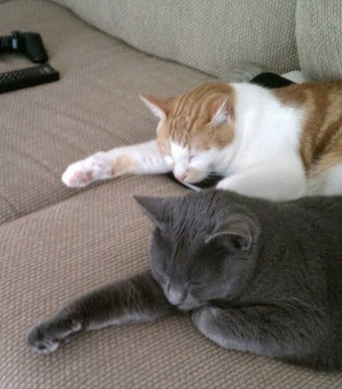 Фото 17 - 20 пар совершенно синхронных котов