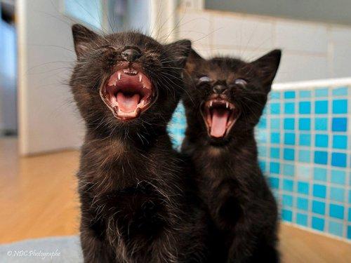 Фото 18 - 20 пар совершенно синхронных котов