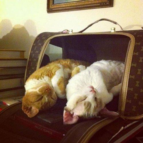 Фото 19 - 20 пар совершенно синхронных котов