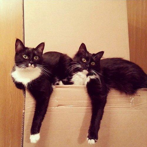 Фото 2 - 20 пар совершенно синхронных котов
