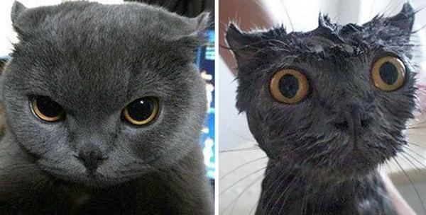 Фото 2 - помытые и оскорблённые 8 котов принявших ванну
