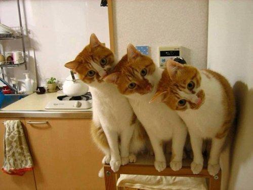 Фото 20 - 20 пар совершенно синхронных котов