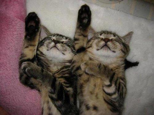 Фото 4 - 20 пар совершенно синхронных котов