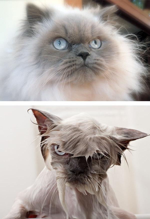 Фото 6 - помытые и оскорблённые 8 котов принявших ванну
