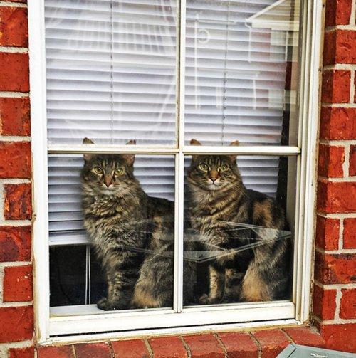 Фото 6 - 20 пар совершенно синхронных котов
