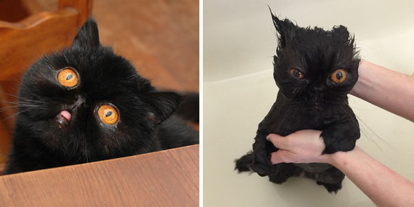 Фото 7 - помытые и оскорблённые 8 котов принявших ванну