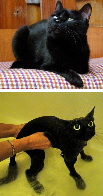 Помытые и оскорблённые: 8 котов, принявших ванну