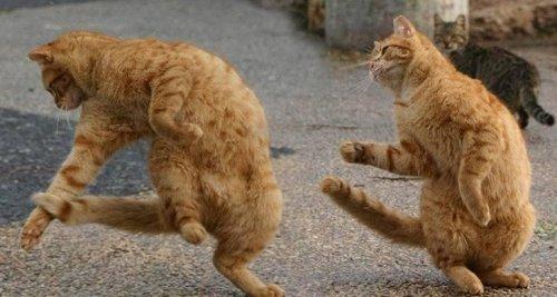 Фото 9 - 20 пар совершенно синхронных котов