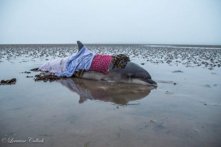 Случайная ошибка навигатора помогла спасти дельфина от жестокой гибели!
