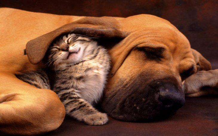 20 самых милых зверушек, решивших вздремнуть