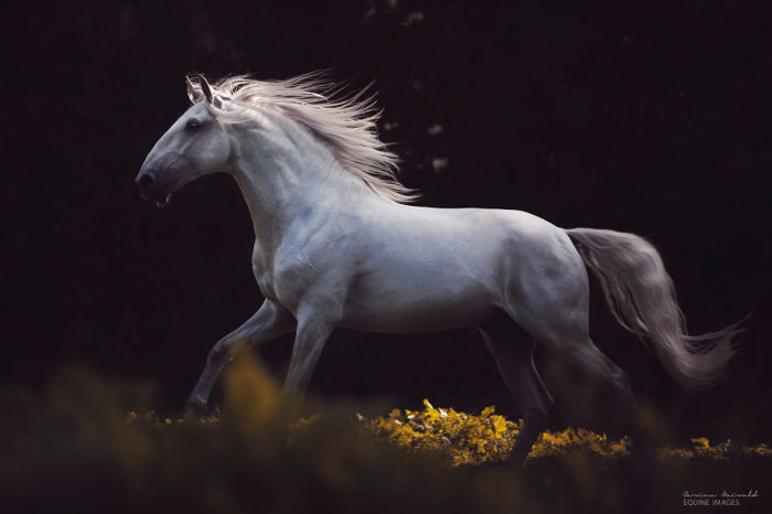 Лошадь — это красиво! 18 завораживающих фотографий свободолюбивых скакунов