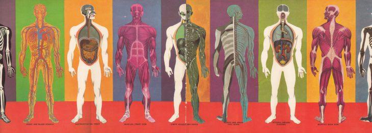 20 по настоящему шокирующих фактов о человеческом теле, не рекомендованных слишком впечатлительным людям