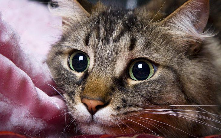 4 научно обоснованных способа, которыми котики продляют нам жизнь