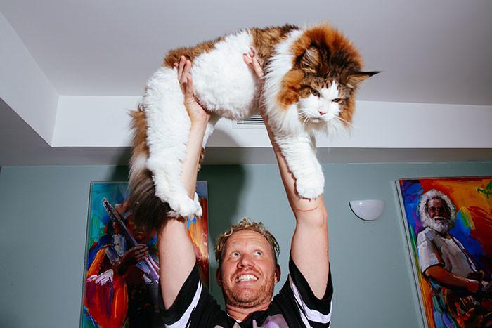 Этот кот огромен и совершенно неотразим!