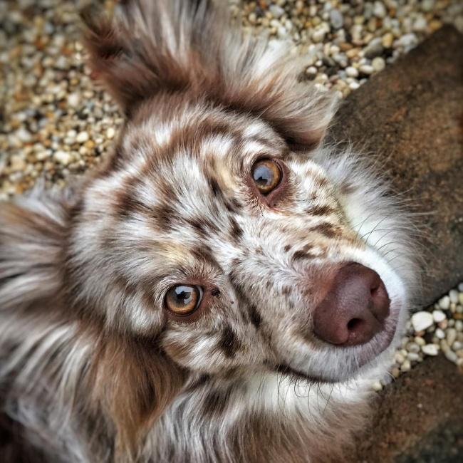 Фото 10 - 15 настолько симпатичных пород собак что даже не верится