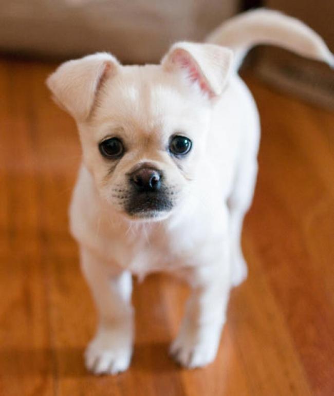 Фото 11 - 15 настолько симпатичных пород собак что даже не верится