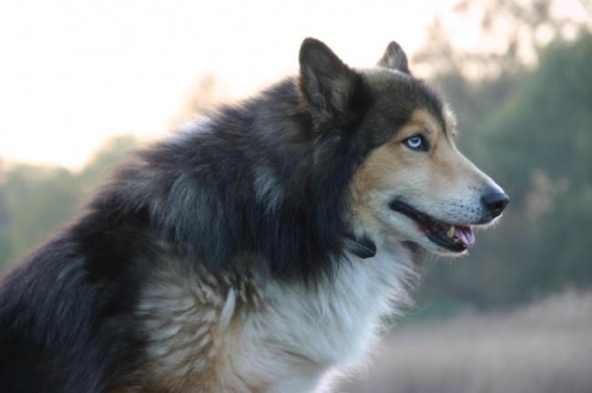 Фото 15 - 15 настолько симпатичных пород собак что даже не верится