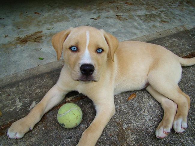 Фото 7 - 15 настолько симпатичных пород собак что даже не верится