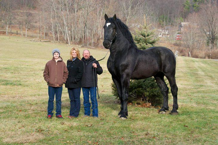 25 самых красивых и грациозных лошадей, которыми можно любоваться бесконечно