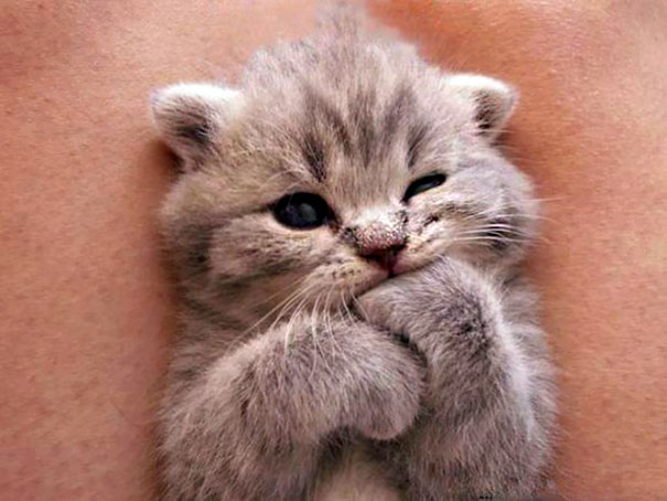 картинки котят самых милых