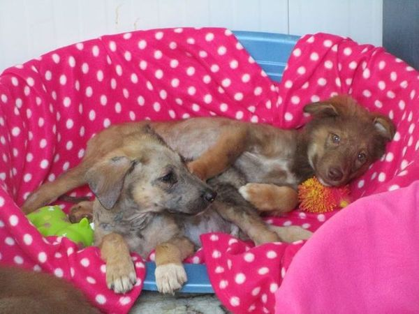 История спасения щенков в Румынии. На эти кадры невозможно смотреть без слёз