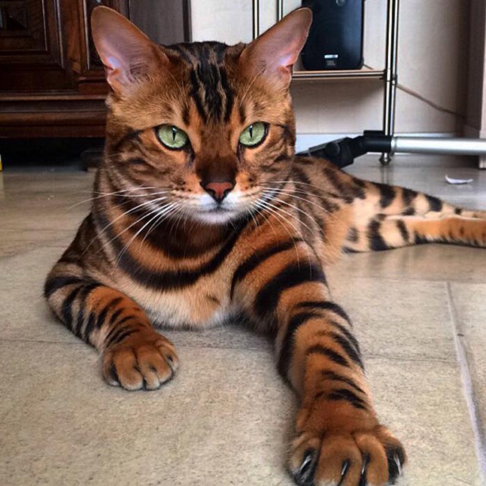 Фото - пушистые красавчики 30 самых чудесных котиков со всего мира