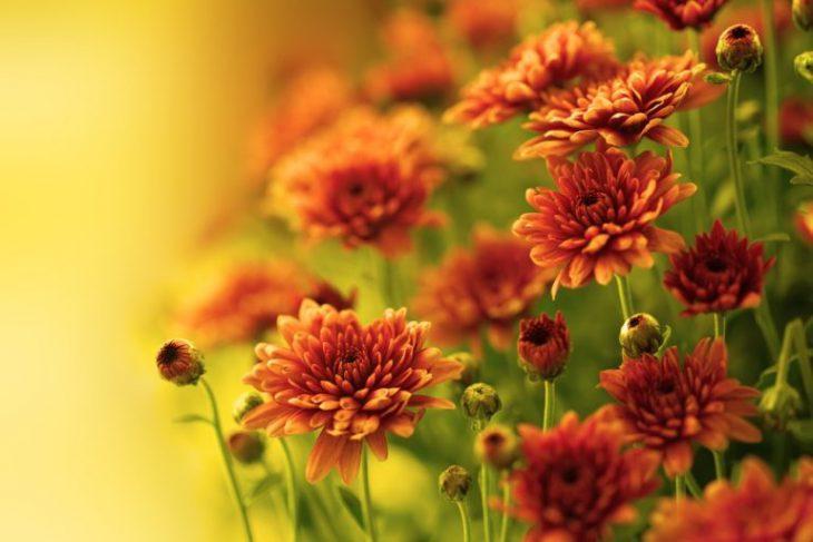 Фото 2 - 9 самых неприхотливых растений очищающих воздух от вредных веществ