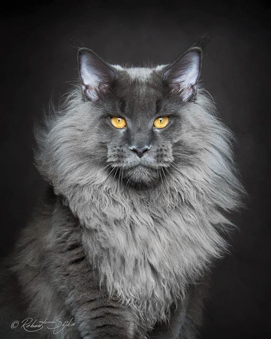 Фото 11 - пушистые красавчики 30 самых чудесных котиков со всего мира