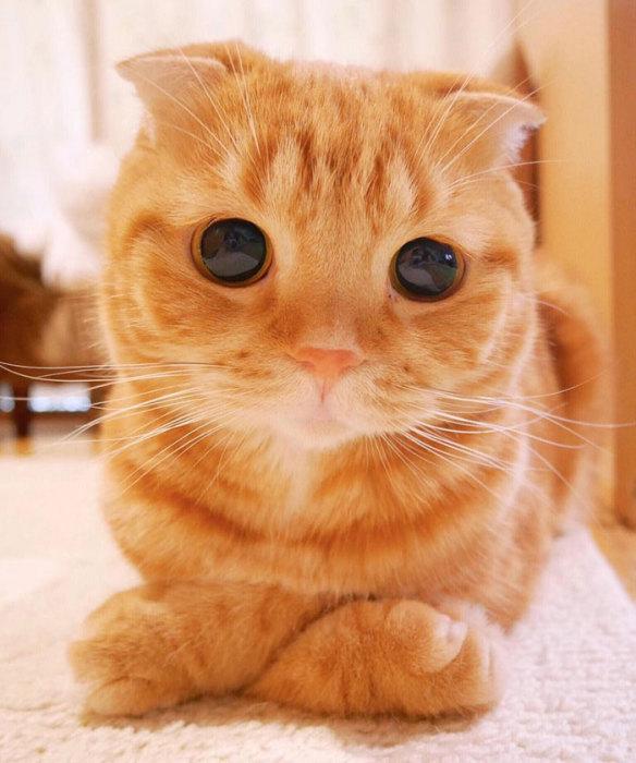 Фото 12 - пушистые красавчики 30 самых чудесных котиков со всего мира