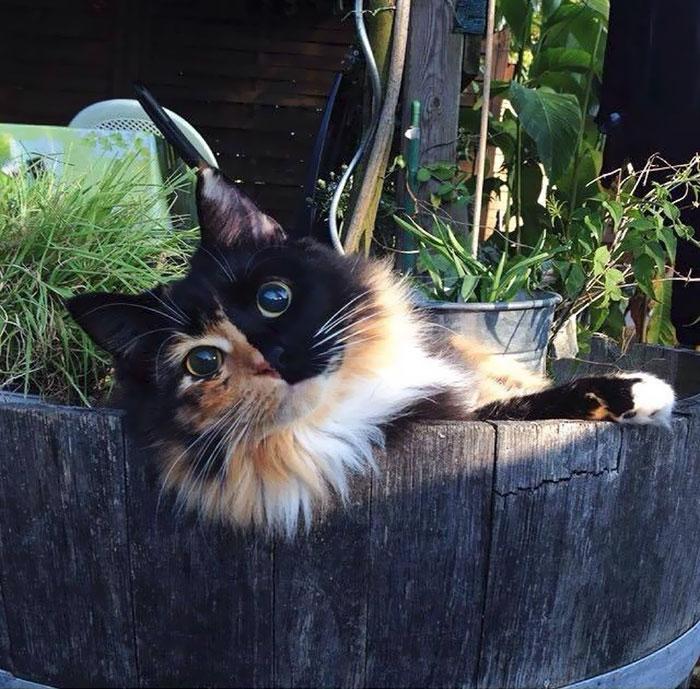 Фото 13 - пушистые красавчики 30 самых чудесных котиков со всего мира