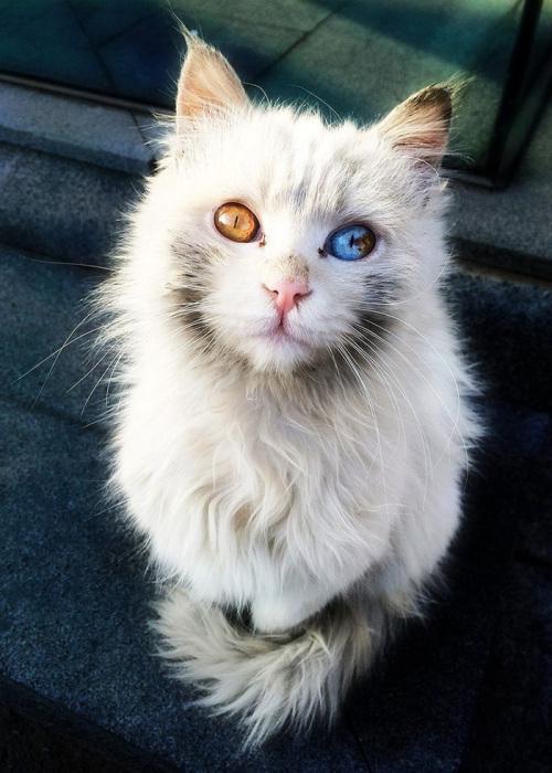 Фото 15 - пушистые красавчики 30 самых чудесных котиков со всего мира