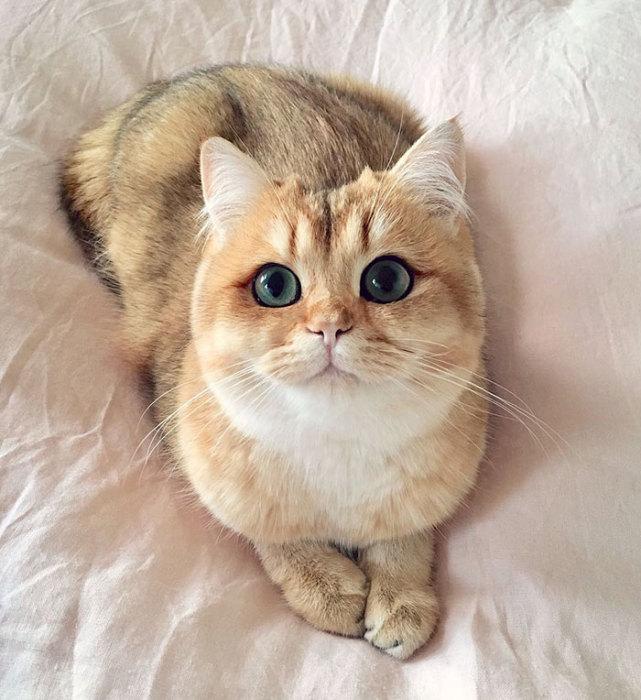 Фото 16 - пушистые красавчики 30 самых чудесных котиков со всего мира