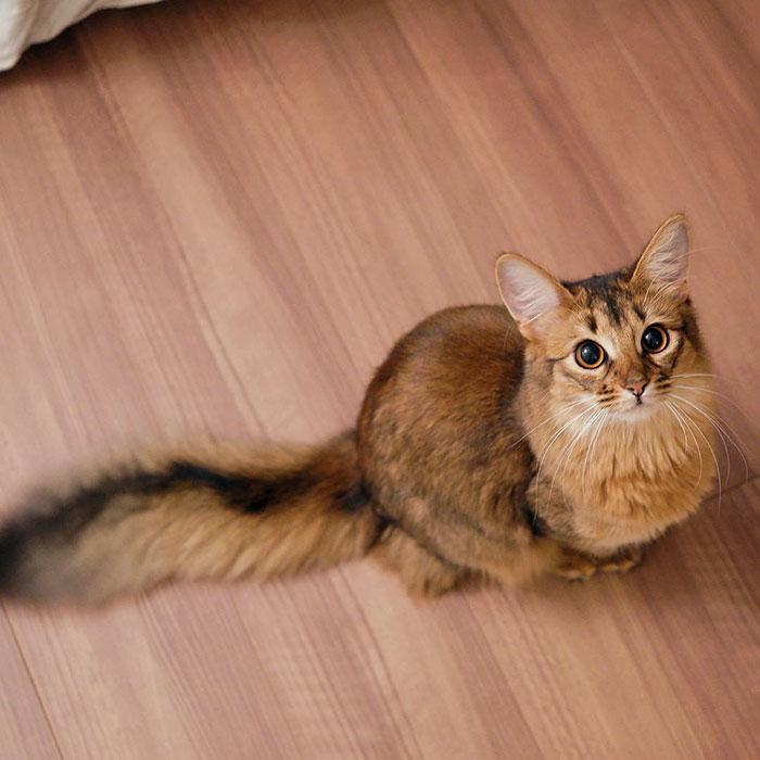 Фото 17 - пушистые красавчики 30 самых чудесных котиков со всего мира